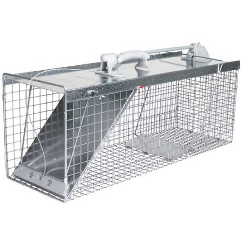 Example of raccoon trap